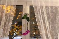 Mein Sky Plantet hängt am Fenster zwischen den Gardinen