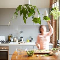 Ob in der Küche für Basilikum, Dill und Co.